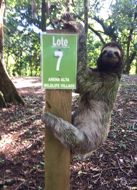 Among others sloth will visit your lot almost every day